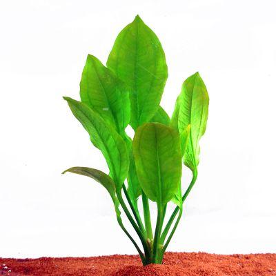 Aquariumplanten Zooplants Rood accent