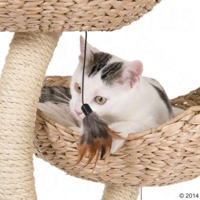 arbre a chat cat's flower