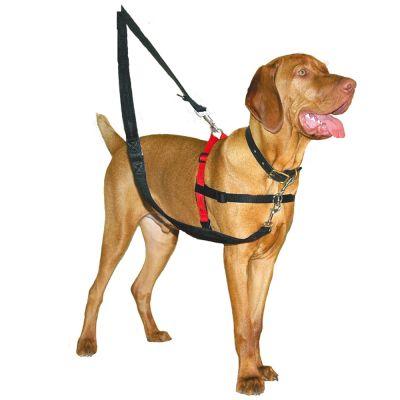 arnes perro antitirada