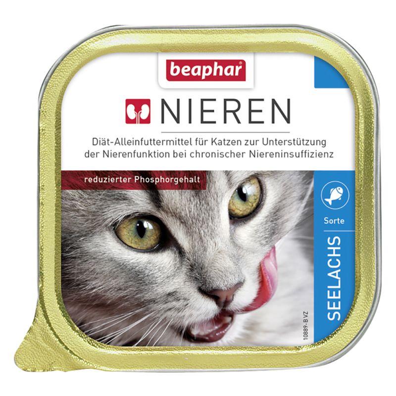 Atemberaubend Katze Niere Anatomie Bilder - Menschliche Anatomie ...