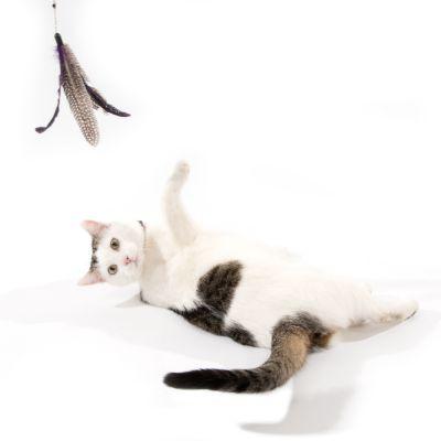 Bird - wędka dla kota