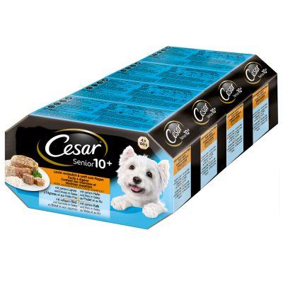 Cesar Senior Dog Food