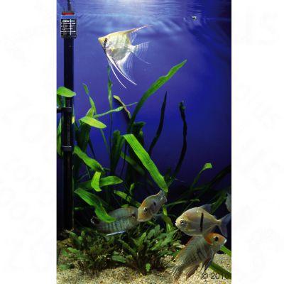 Chauffage de précision pour aquarium Eheim Jäger