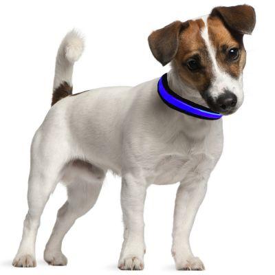 repérage lumineux pour chiens
