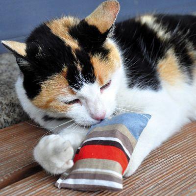 Coussin de jeu Aumüller Baldini à la valériane pour chat