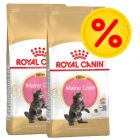Dobbeltpakke Royal Canin Maine Coon Kitten