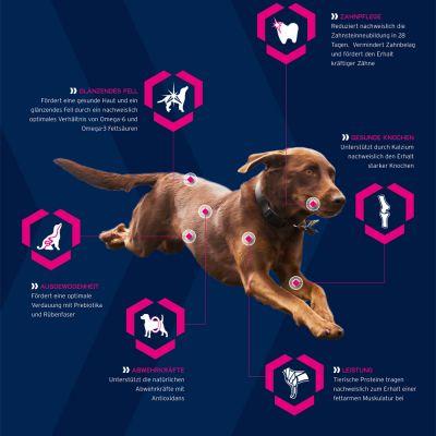 Eukanuba Mature & Senior Medium Breed Hondenvoer