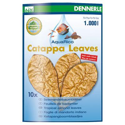 Feuilles de badamier Dennerle Catappa Leaves