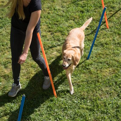 Fun & Sport Dog Agility Weave Poles