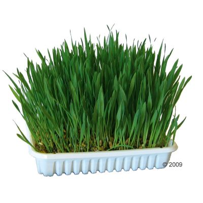 Herbe pour rongeur