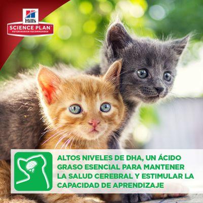 Hill's Kitten Healthy Development con atún para gatitos