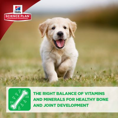 Hill's Science Plan Puppy Healthy Development Medium Chicken