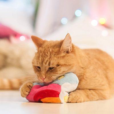 Jouet Aumüller Cœur arc-en-ciel pour chat