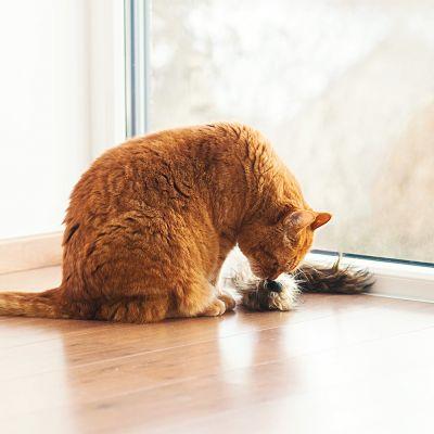Jouet Aumüller Furet pour chat