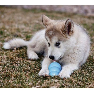 kong puppy jouet pour petit chien et chiot zooplus. Black Bedroom Furniture Sets. Home Design Ideas