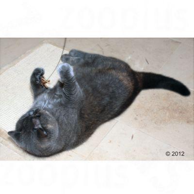 Katzenangel Cat Dancer
