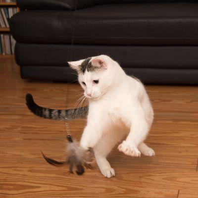 Katzenangel 3 in 1 XXL