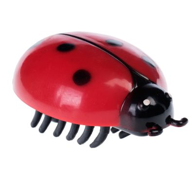Katzenspielzeug Insekt