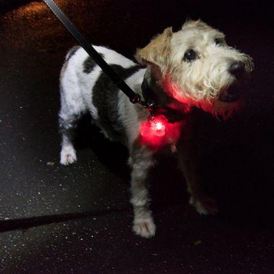 13 kg Taste of the Wild hrana za pse + svjetleći privjesak gratis!