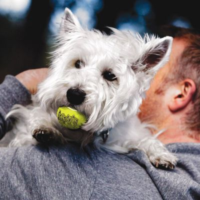 KONG Airdog Squeaker Ball tennisbollar med pipljud