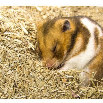 Lettiera per roditori Bunny Bedding Active