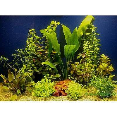 Lot de plantes pour aquarium de 80 cm
