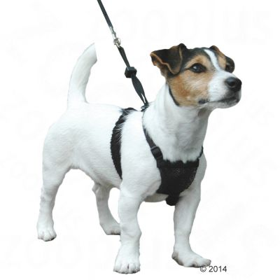 Non Pull Dog Harness Free P Amp P 163 29