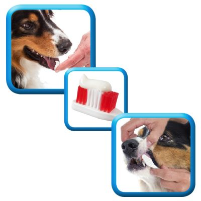 Pasta dentifricia Beaphar per cani e gatti