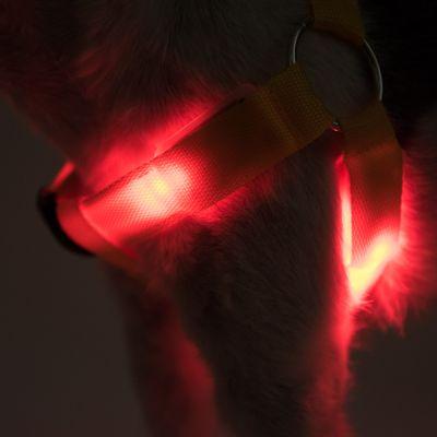 Pettorina luminosa