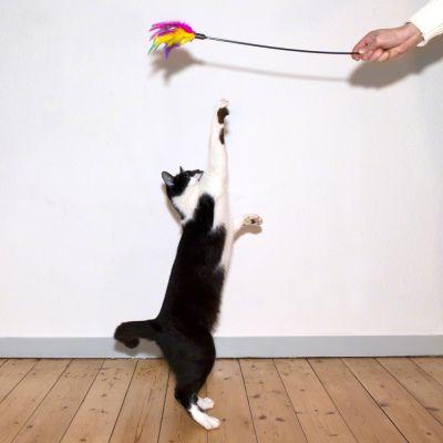 Plumeau de jeu pour chat