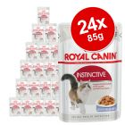 Royal Canin Adult Jelly & Gravy Mixed Pack 24 x 85g
