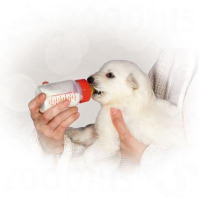 Royal Canin Babydog milk