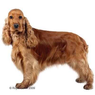Royal Canin Breed Hondenvoer - Cocker Adult