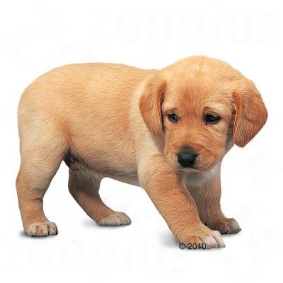 Royal Canin Breed Hondenvoer - Labrador Retriever Junior