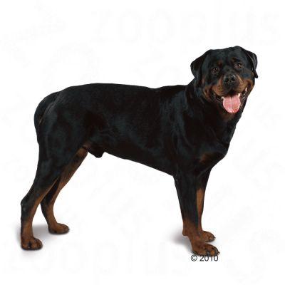 Royal Canin Breed Hondenvoer - Rottweiler Adult