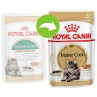 Royal Canin Breed Maine Coon pour chat