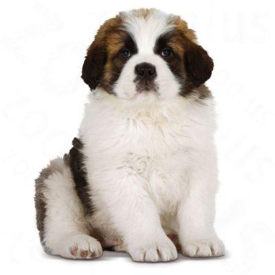 Royal Canin Giant Puppy Hondenvoer