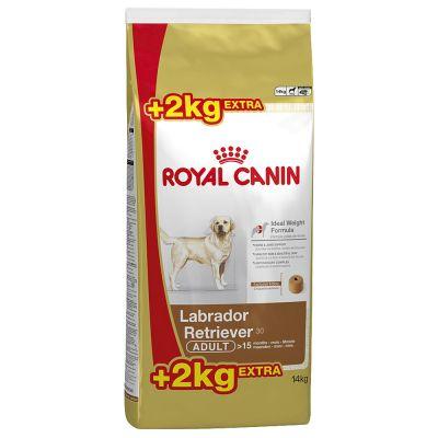 Labrador puppy корм royal canin
