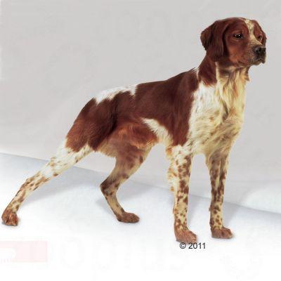 Royal Canin Medium Adult Hondenvoer