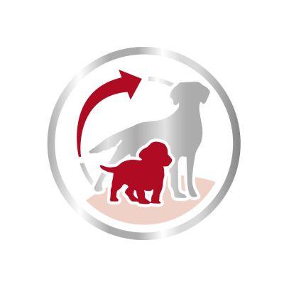 Royal Canin Medium Starter Mother & Babydog Hondenvoer
