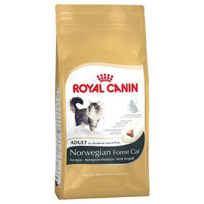 Royal Canin Norvegese delle Foreste