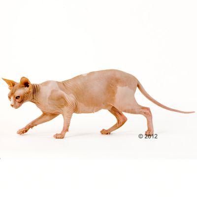 Royal Canin Sphynx 33