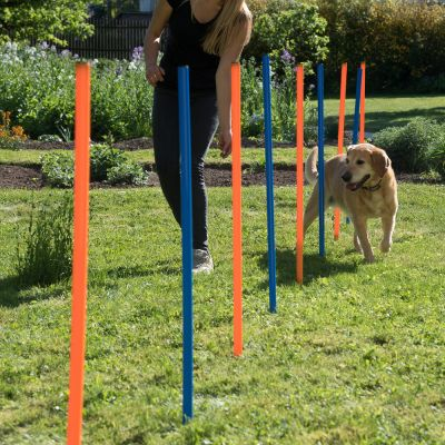 Set completo per Agility Dog Fun & Sport