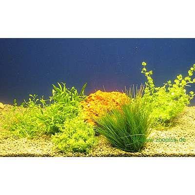 Set di piante acquatiche Zooplants per parte anteriore