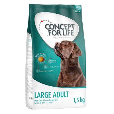 Set transition! Concept for Life Large - verso la vita adulta