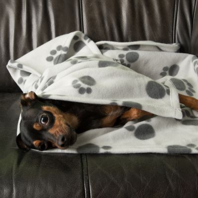 Set Trasportino First Class Basic per cani + Coperta in pile Pawty