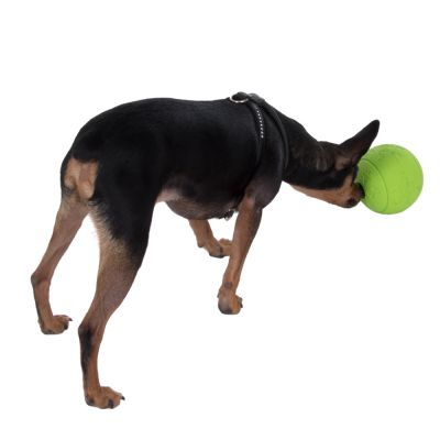 Snackball kutyajáték