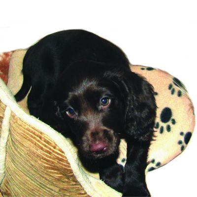 SnuggleSafe toplinski jastuk za kućne ljubimce