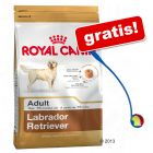 Stor påse Royal Canin Breed + Tennis Ball Launcher på köpet!