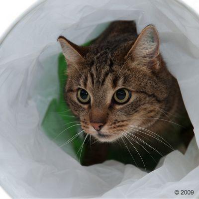 Szeleszczący tunel dla kota, zielono-biały